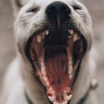 Best Dog Repellent For Cyclists 2021 Reviews & Buyer's Guide