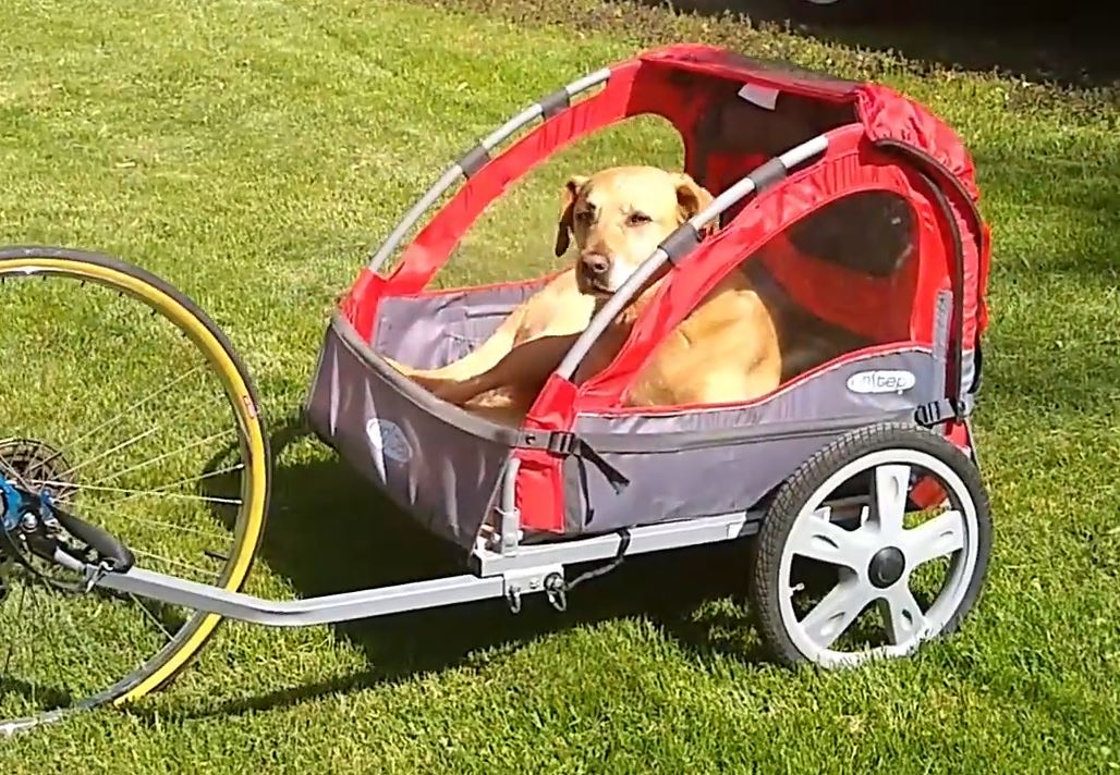 7 Best Bike Trailers For Dogs 2020/2021 – Reviews & Buying Guide