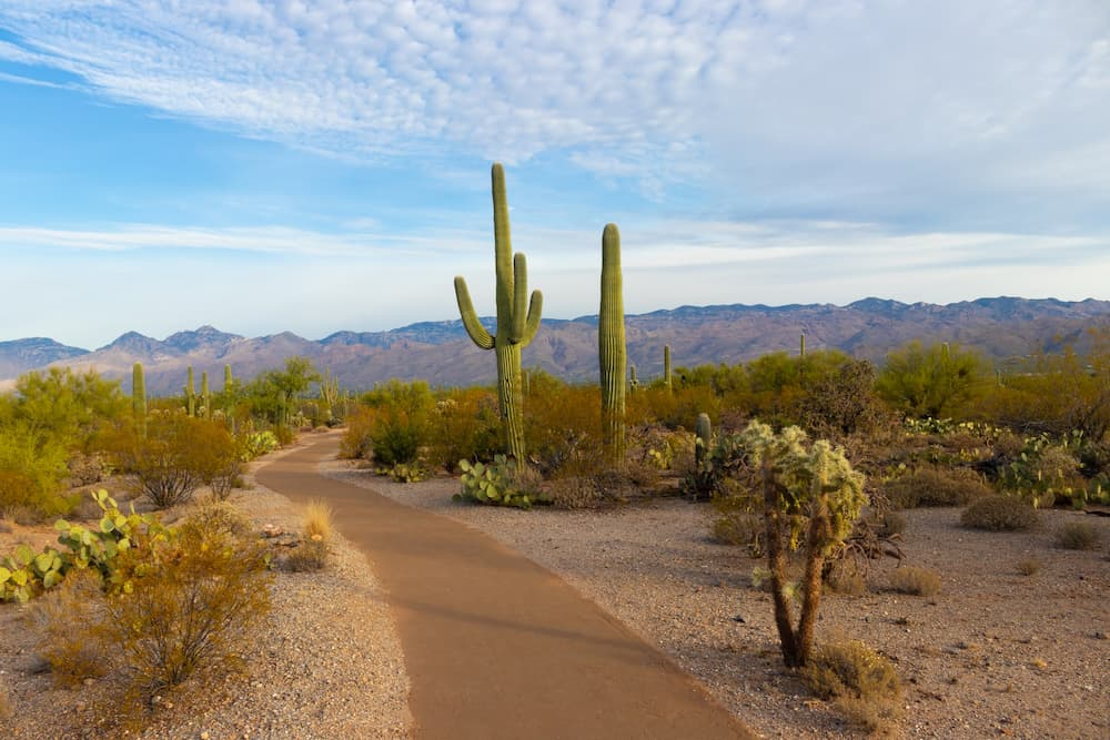You are currently viewing Arizona Bicycle Laws