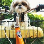 How To Ride A Bike With A Dog In A Basket?
