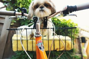 Read more about the article How To Ride A Bike With A Dog In A Basket?