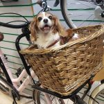How To Carry A Dog On A Bike?