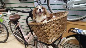 How To Carry A Dog On A Bike